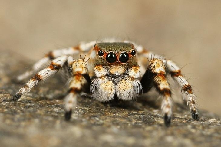 Por Que Não Devemos Matar Aranhas - aranha com palpos à mostra
