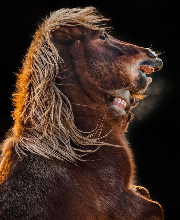 A impactante beleza dos animais selvagens - potro