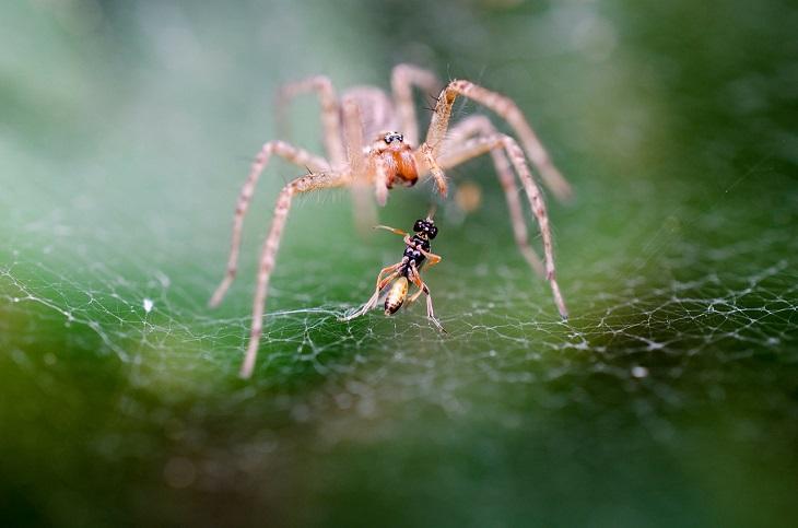 Por Que Não Devemos Matar Aranhas - aranha na teia