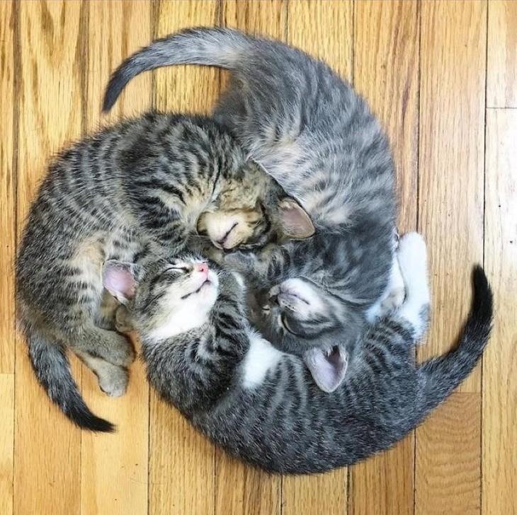 Animais adormecidos - gatos