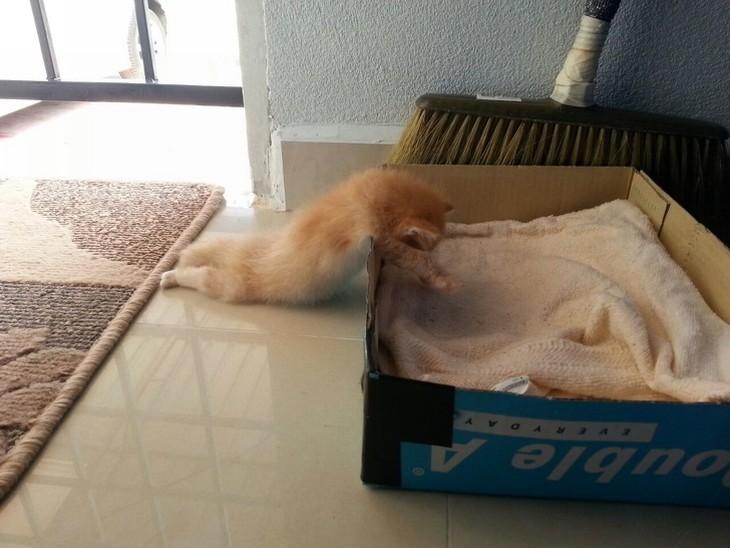 Animais adormecidos - gato