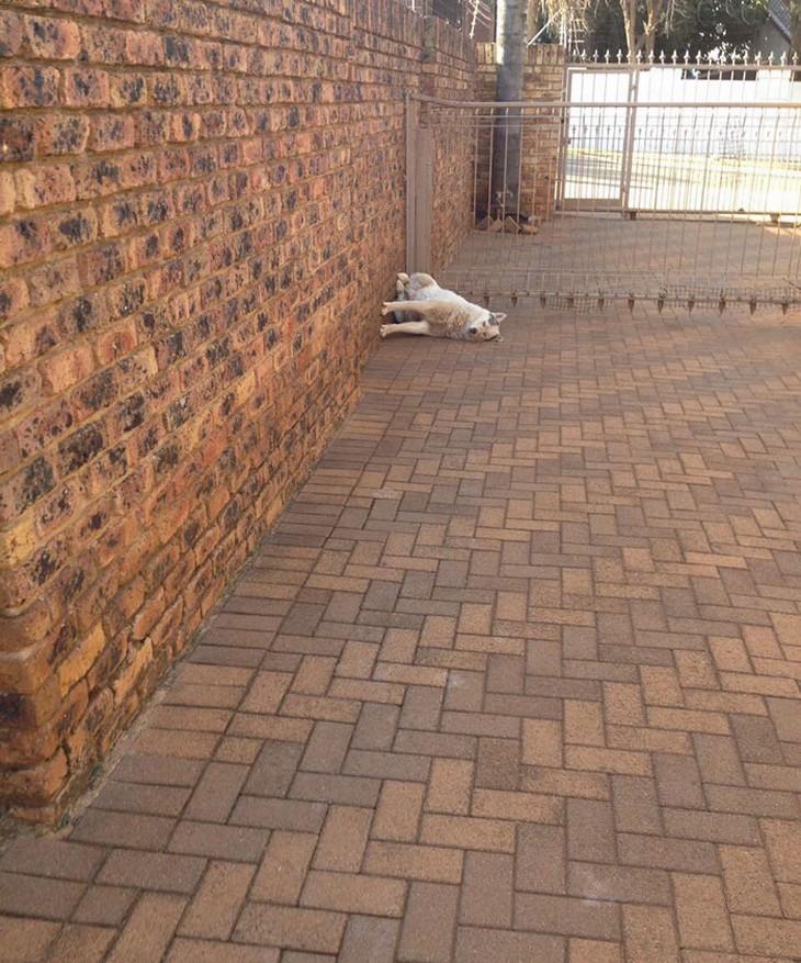 Animais adormecidos - cão