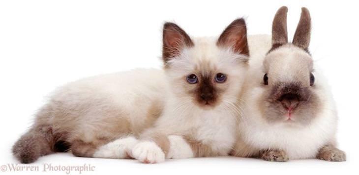Roubo de identidade gato e coelho