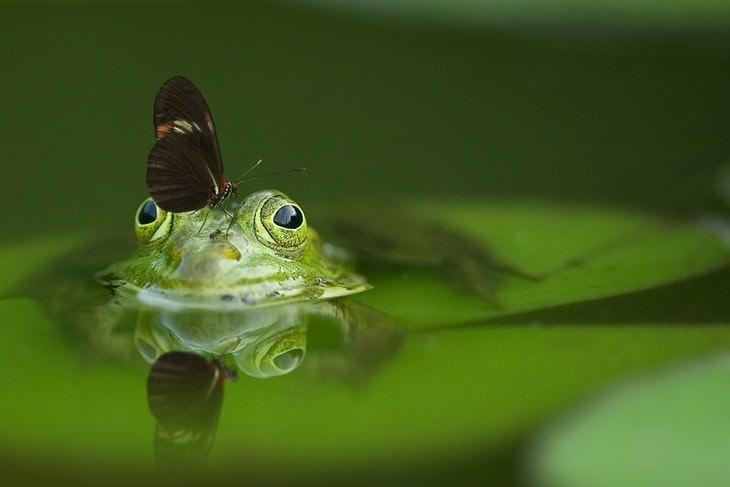 Macrofotografia   sapo e borboleta