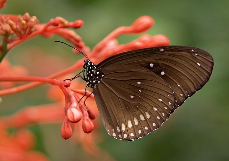 Macrofotografia da natureza  borboleta