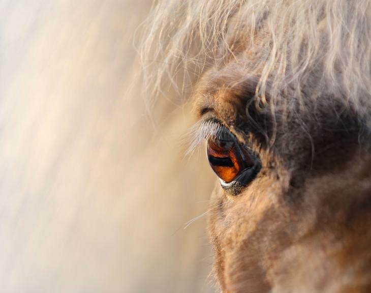 Macrofotografia da natureza  cavalo