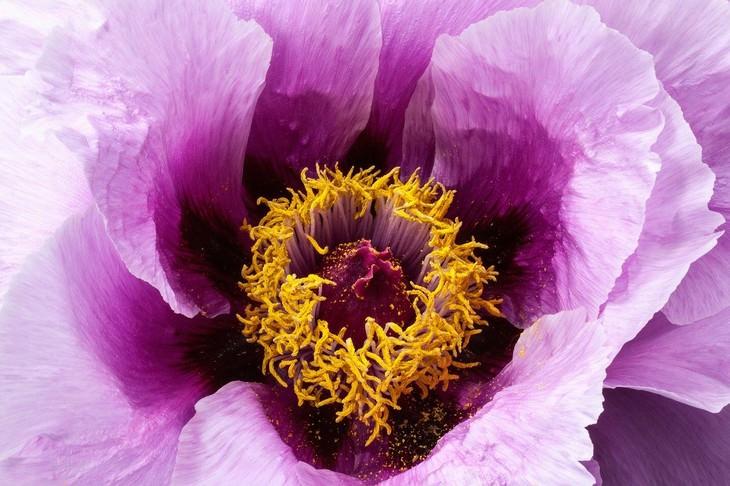 Macrofotografia da natureza  flor