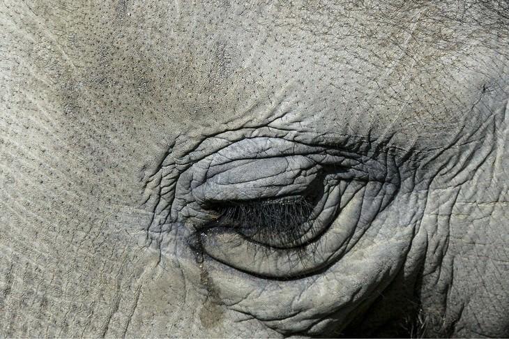 Macrofotografia da natureza  a lágrima do elefante