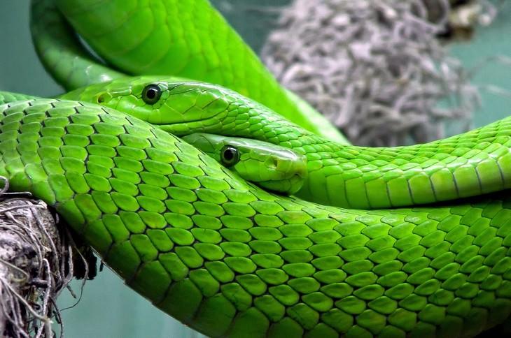 Macrofotografia da natureza  cobras verdes