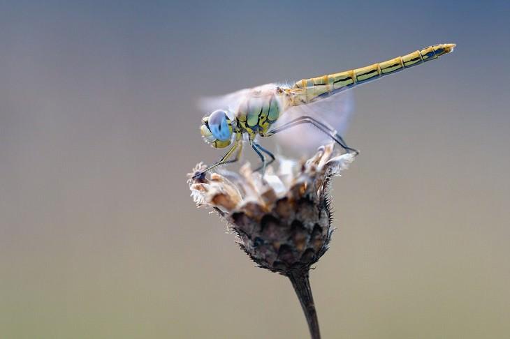 Macrofotografia da natureza  libélula