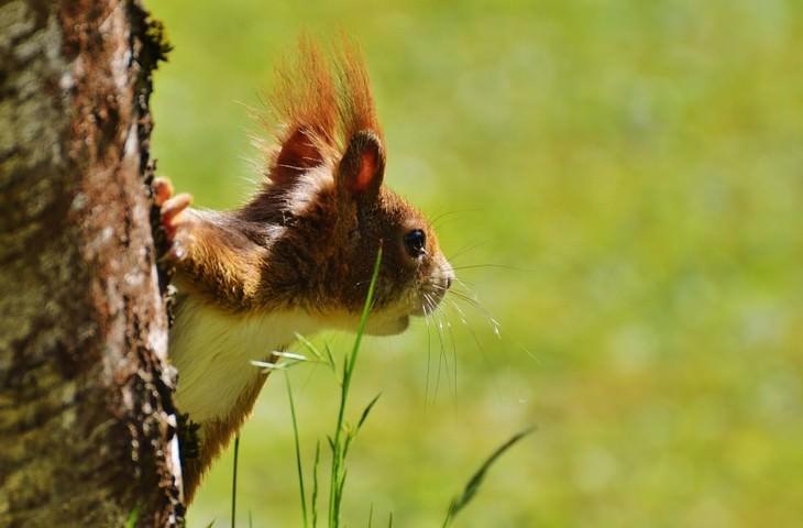 Macrofotografia da natureza  esquilo
