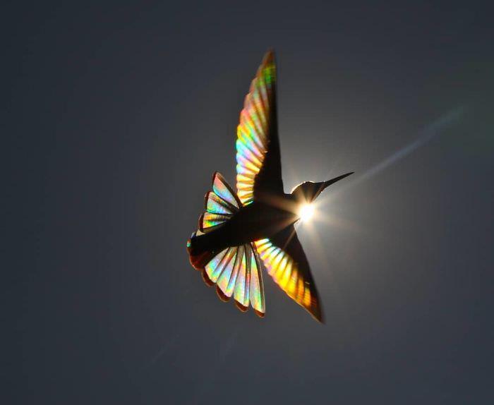 Asas do beija-flor em prisma com sol