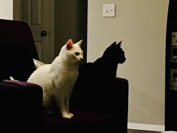 Ilusões de óptica. O gato preto parece ser a sombra do gato branco