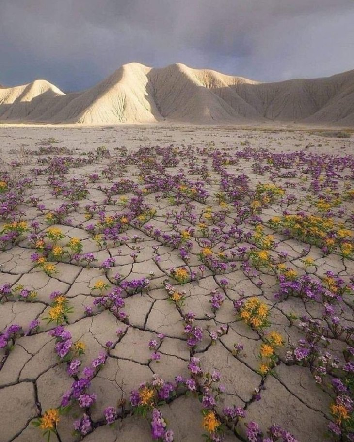 Rare Thing, Atacama Desert in Chile.