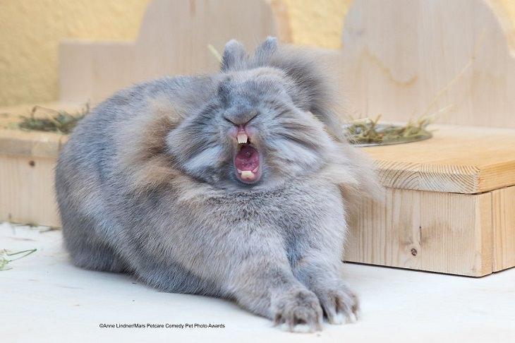 Os melhores e mais engraçados finalistas do Mars Petcare Comedy Pet Photo Awards, 2020