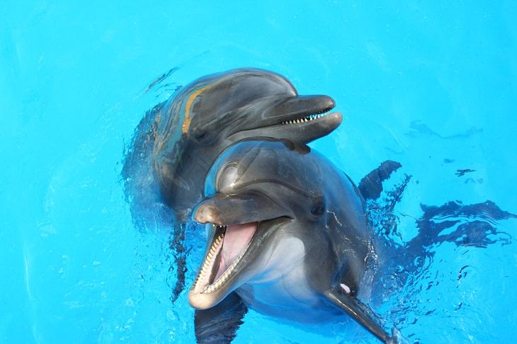 Animais Marinhos Adoráveis