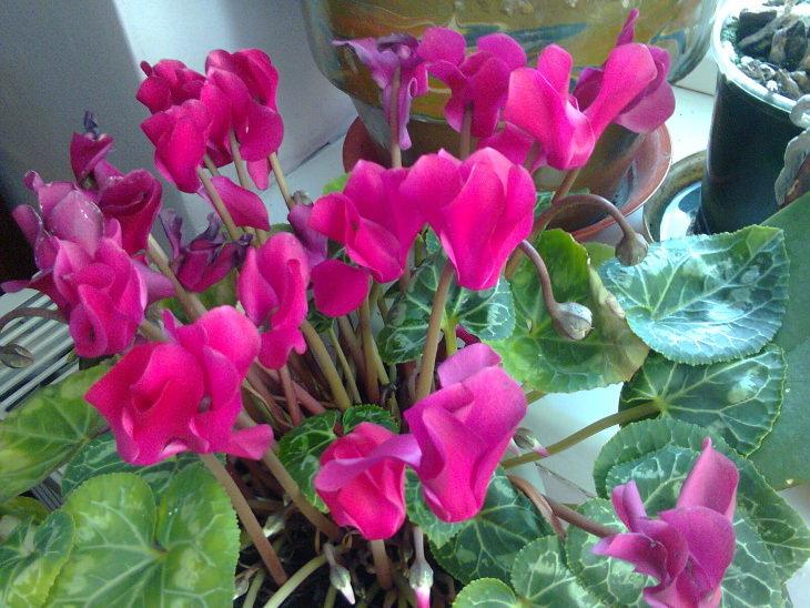 10 flores de inverno resistentes ao frio