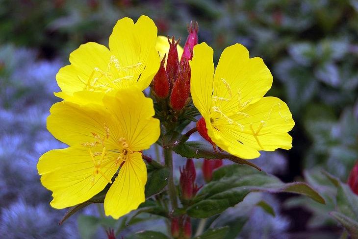 Flores lindas e coloridas para todas as estações que crescem e desabrocham na sombra