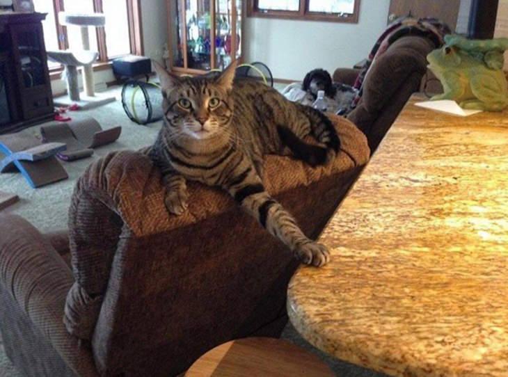 15 vezes que os gatos estavam agindo de forma divertidamente malvada