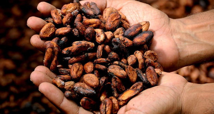 Dark Chocolate and Heart Health cocoa beans in palms