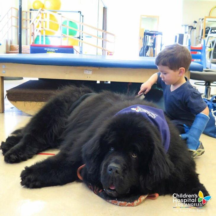 Cães de grande porte amigáveis