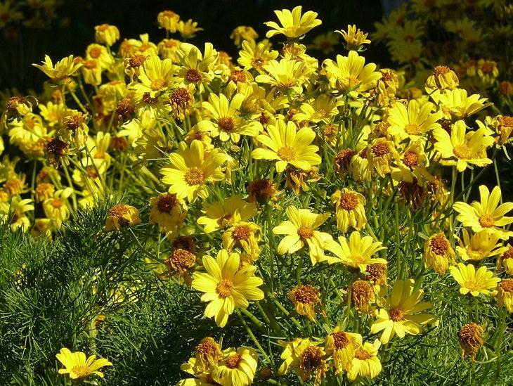 Plantas perenes de baixa manutenção com flores coloridas