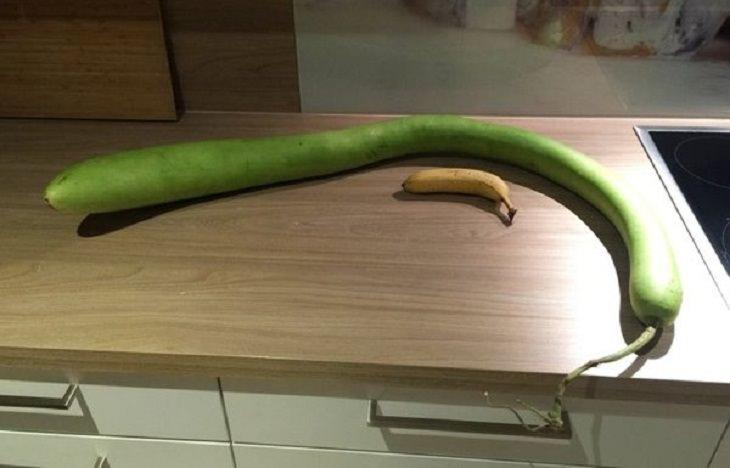 Frutas e vegetais de formato estranho