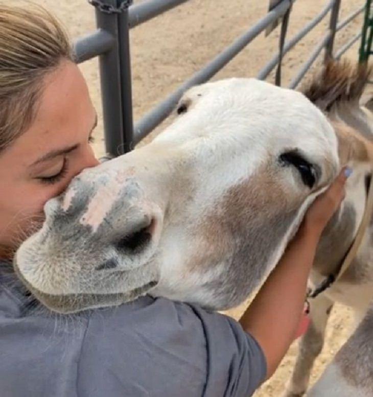 Amizades entre humanos e animais