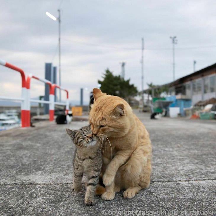 Gatos de rua em Tóquio