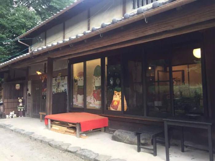 Santuário de gatos no Japão