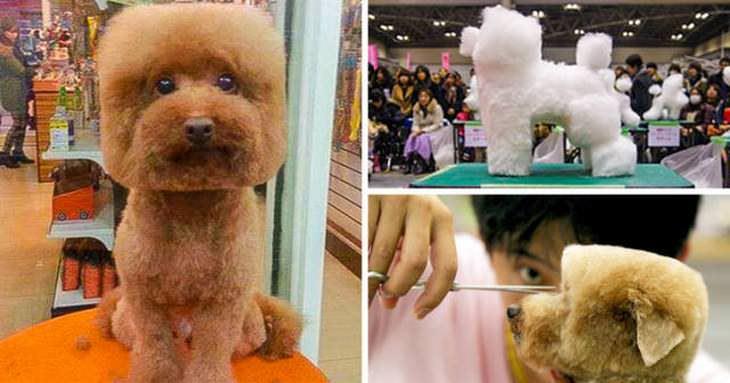 Imagens da modernidade no Japão cortes de pelos de cachorros