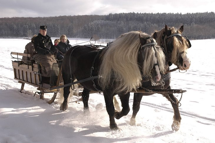 Cavalo da Floresta Negra