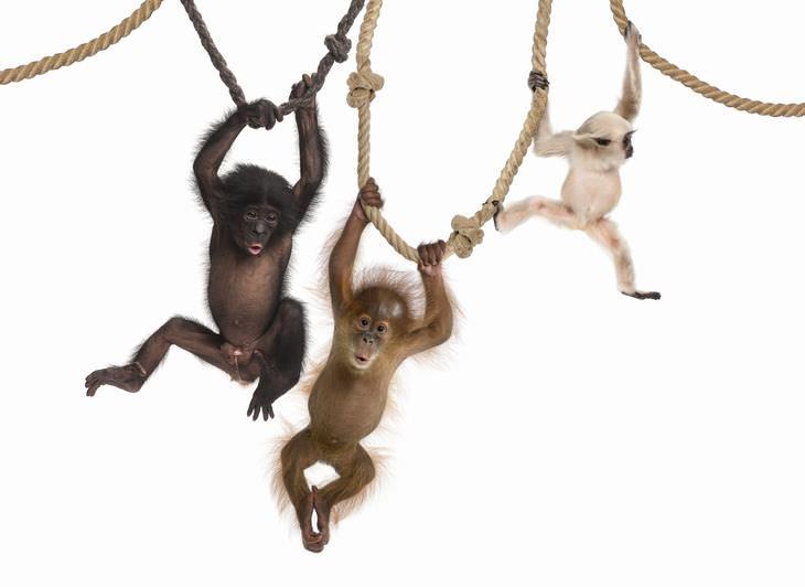 Piada: Três macacos caros