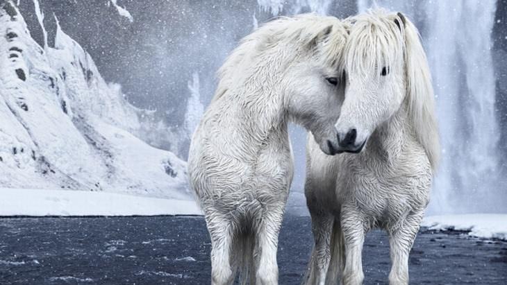 Os mágicos cavalos da Filnândia
