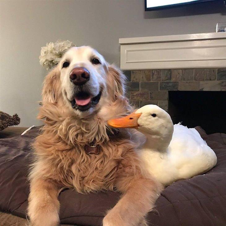 Os amigos Rudy e Barclay