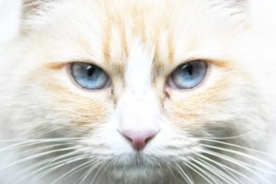 Diários dos pets - gato