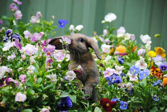 CUTENESS OVERLOAD ALERT: Animals Enjoying Flowers!_ImageBox