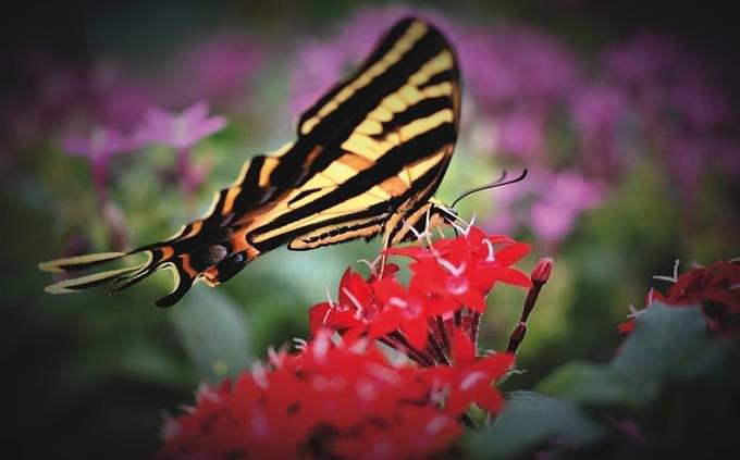 borbolena sobre flor