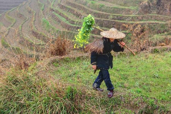 Piada: O presidente e o fazendeiro