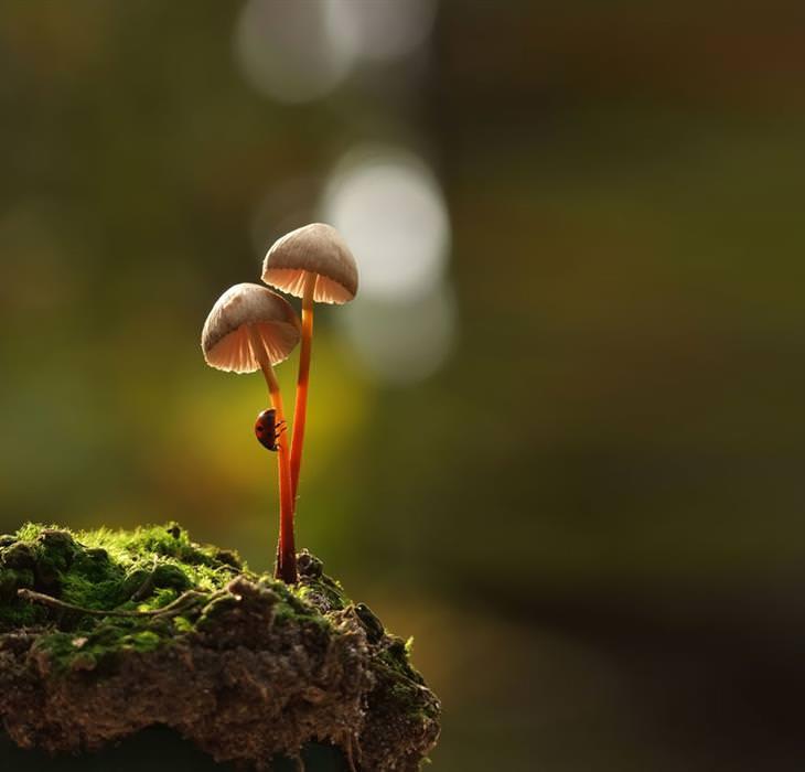Os belos cogumelos