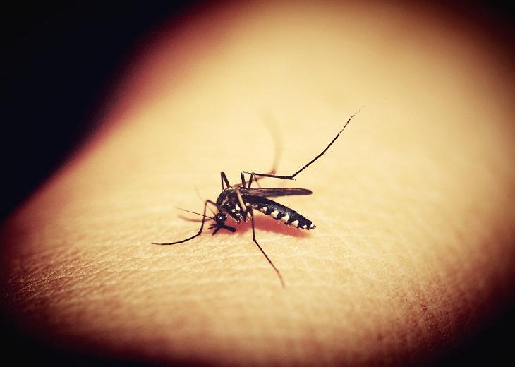 6 epidemias mortais da nossa história Malária