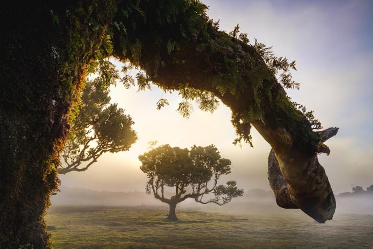 A fascinante floresta de louros da Madeira