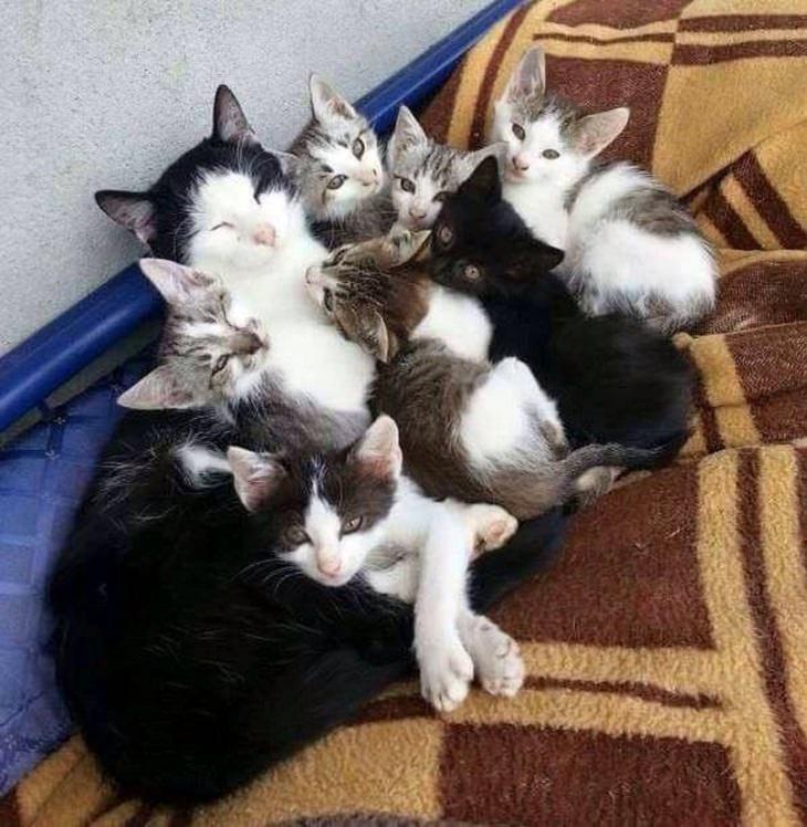 amor de mãe - gatinhos