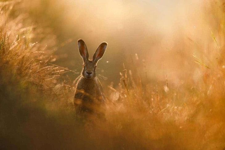 GDT Concurso de Fotos Vida Selvagem 2020 Peter Lindel