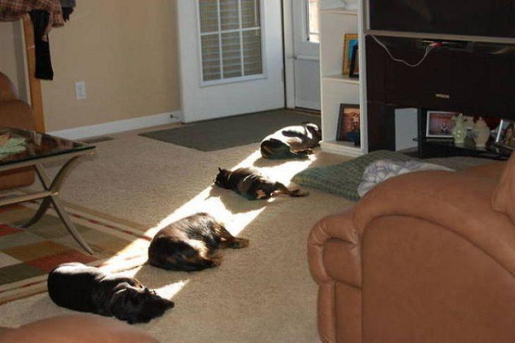 Animais relaxando ao sol