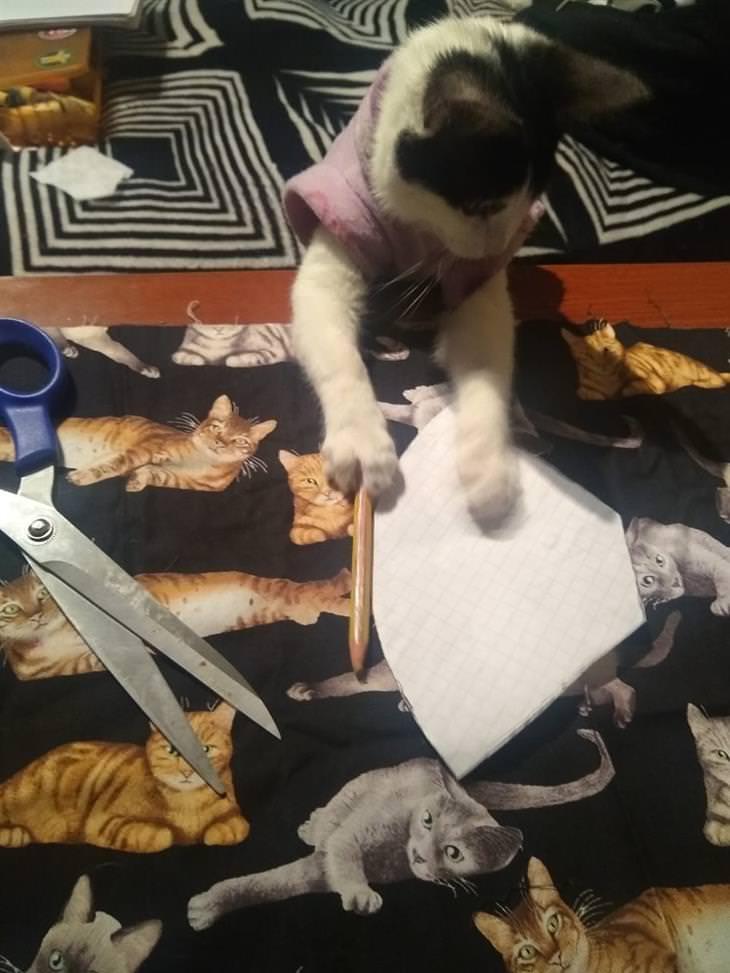 Kira, a gata costureira
