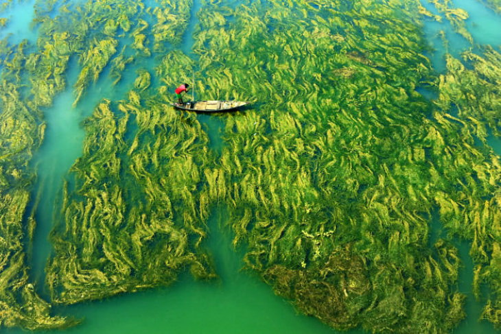 2020 HIPA Concurso de Fotografia da Natureza Apratim Pal