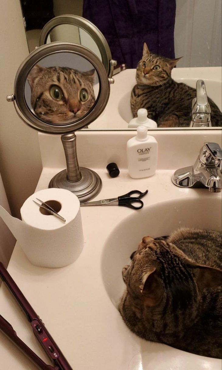 Bichos descobrem o espelho, e é hilariante!