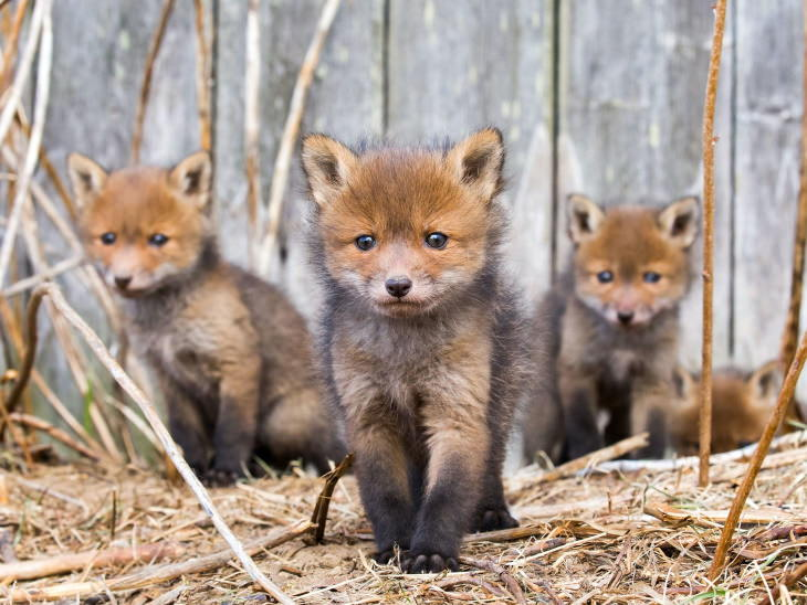 Ossi Saarinen Fotos da vida selvagem 2020