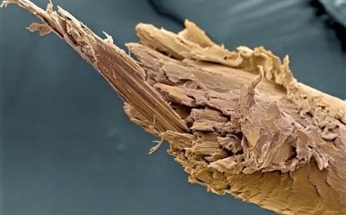fio de cabelo com ponta dupla no microscópio